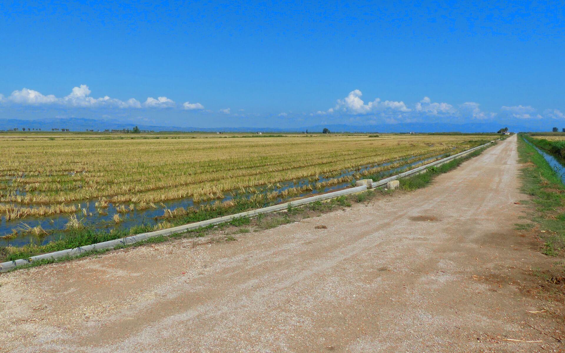 Reisfelder im Ebrodelta mit Blick auf die Berge im Hintergrund